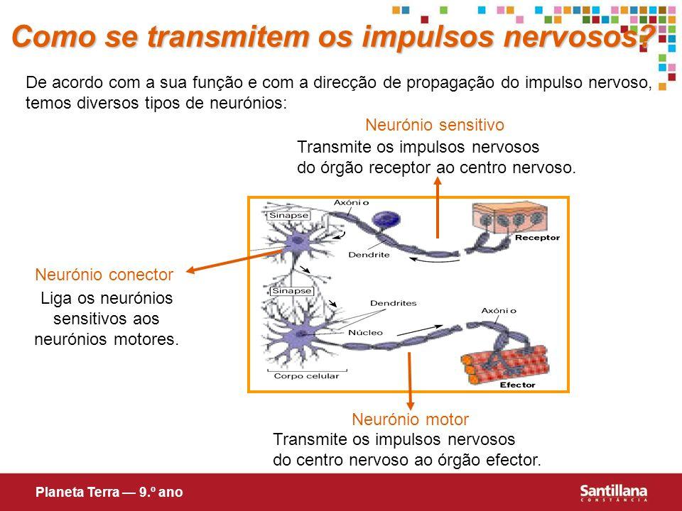 Liga os neurónios sensitivos aos neurónios motores.