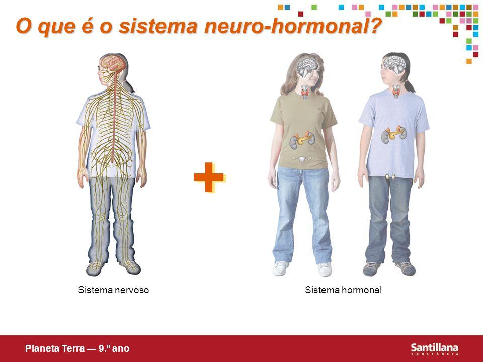 + O que é o sistema neuro-hormonal Sistema nervoso Sistema hormonal