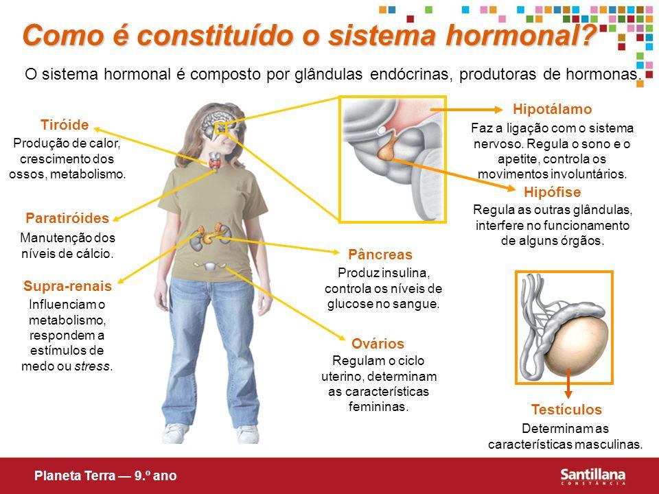 Como é constituído o sistema hormonal