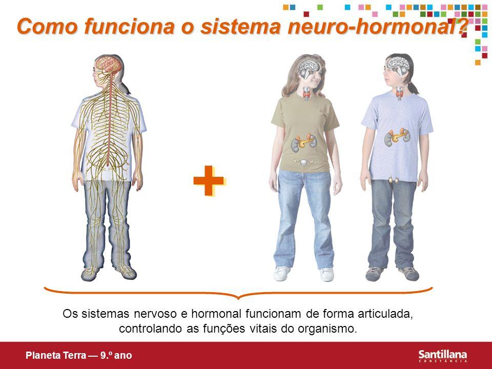 + Como funciona o sistema neuro-hormonal