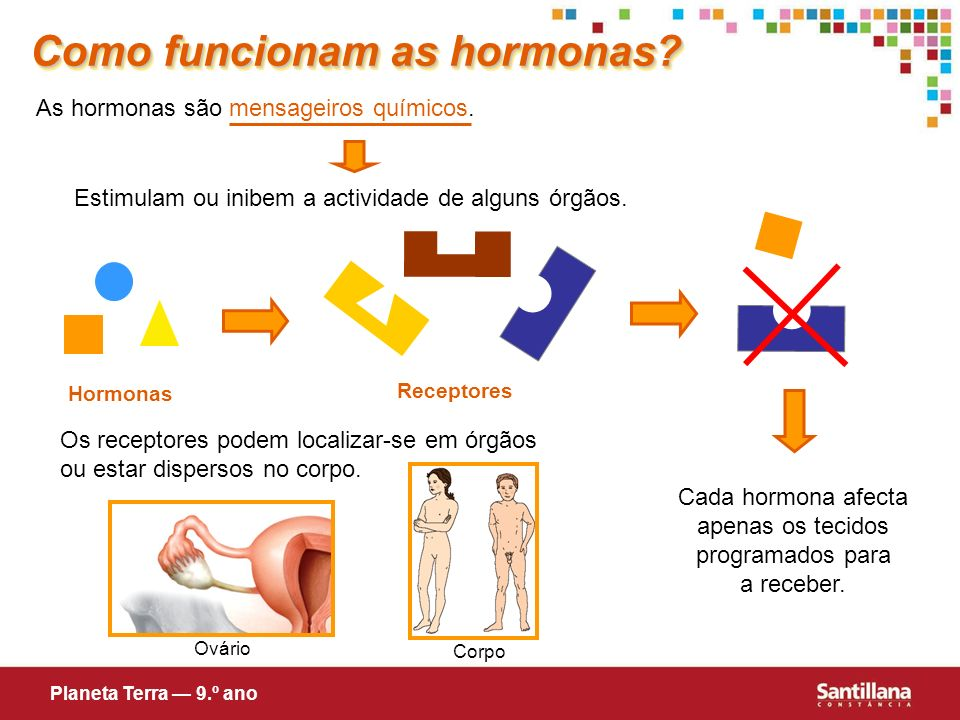 Como funcionam as hormonas