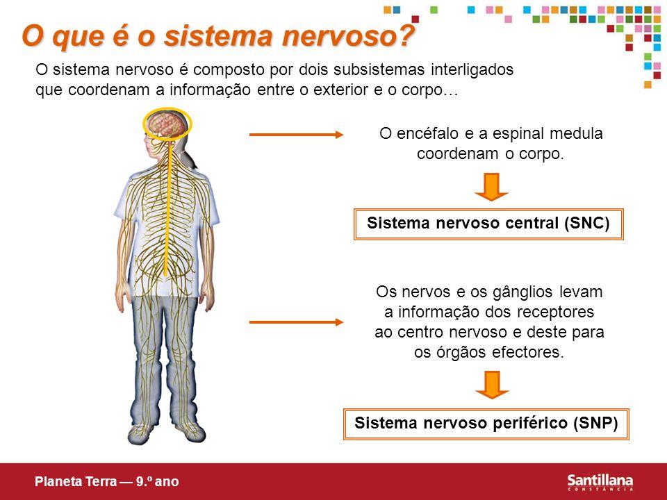 Sistema nervoso central (SNC) Sistema nervoso periférico (SNP)