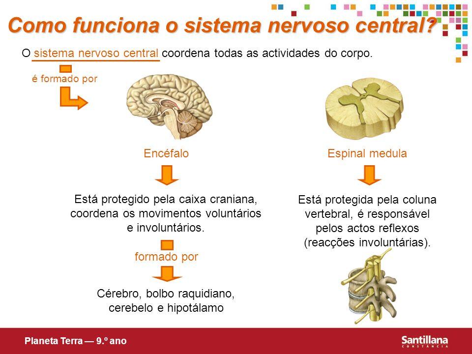Cérebro, bolbo raquidiano, cerebelo e hipotálamo