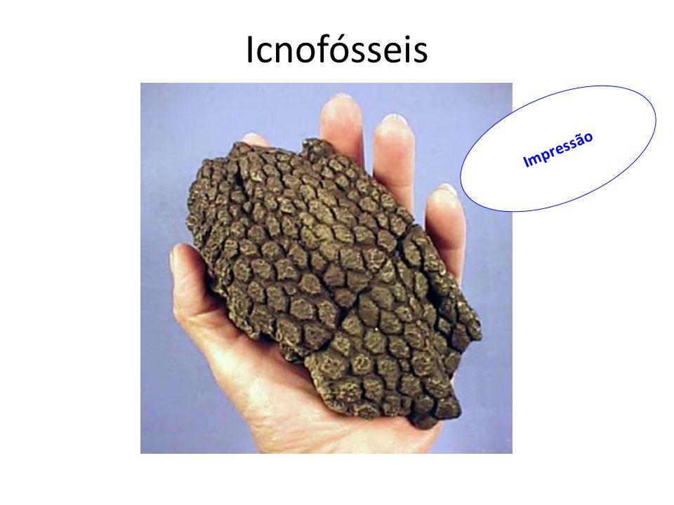 Icnofósseis Impressão
