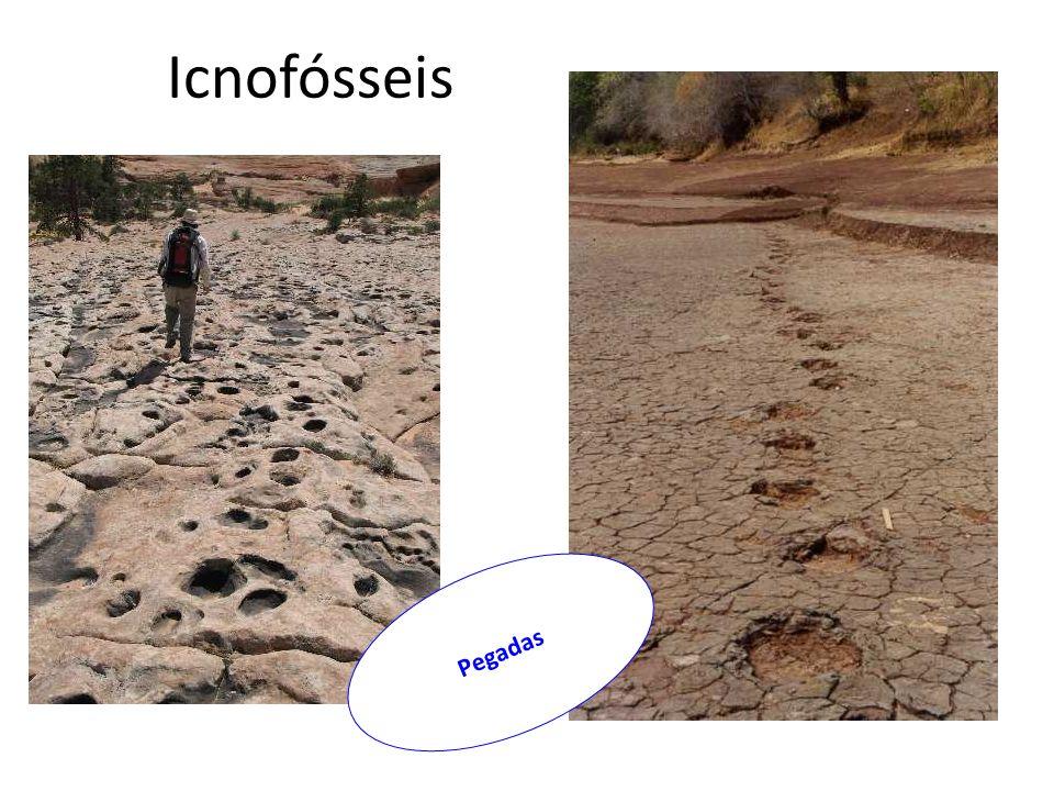 Icnofósseis Pegadas