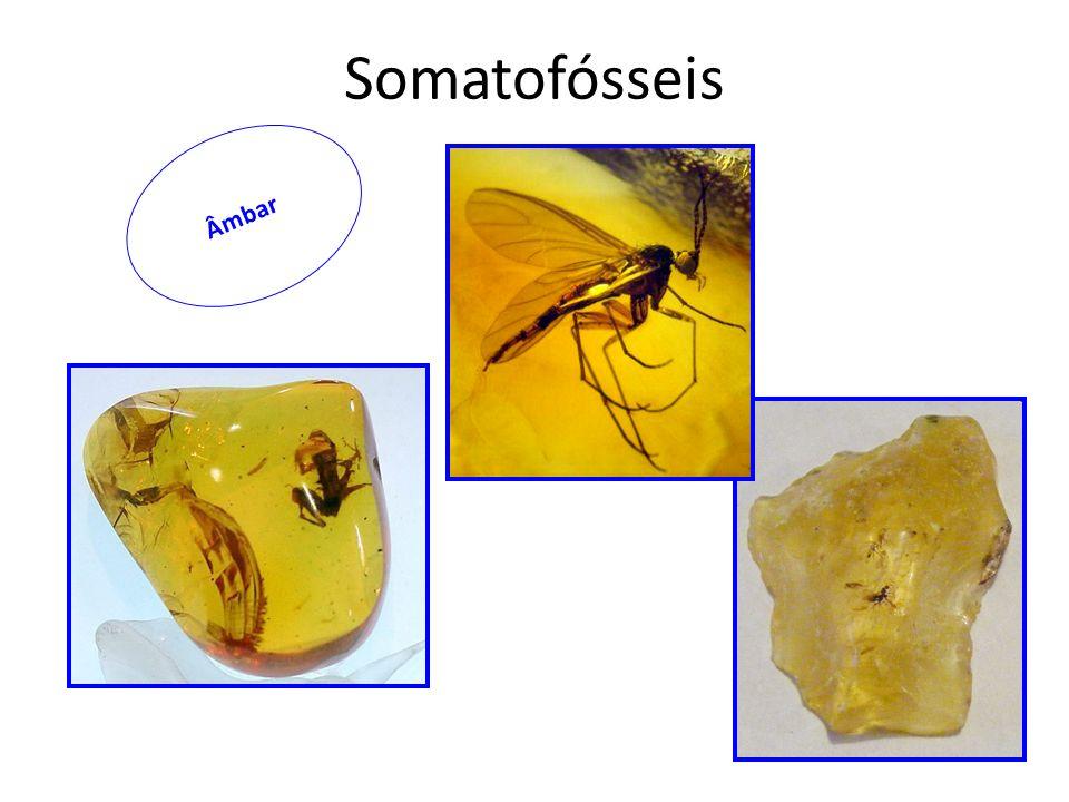 Somatofósseis Âmbar