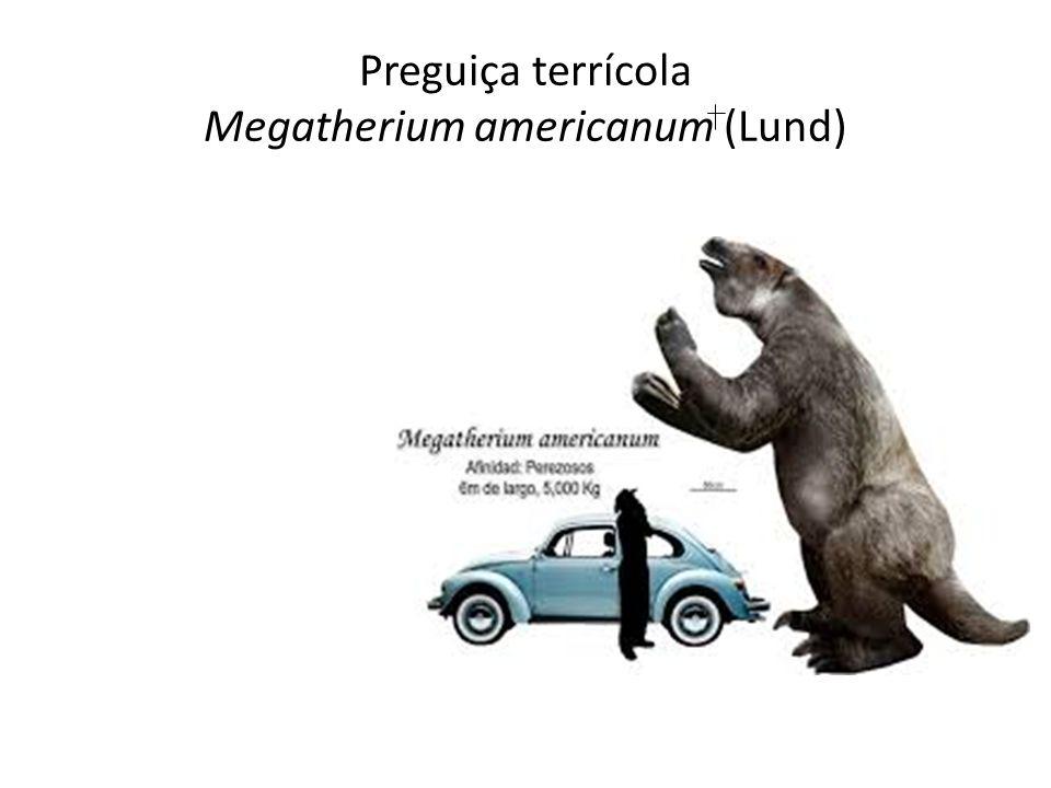 Preguiça terrícola Megatherium americanum (Lund)