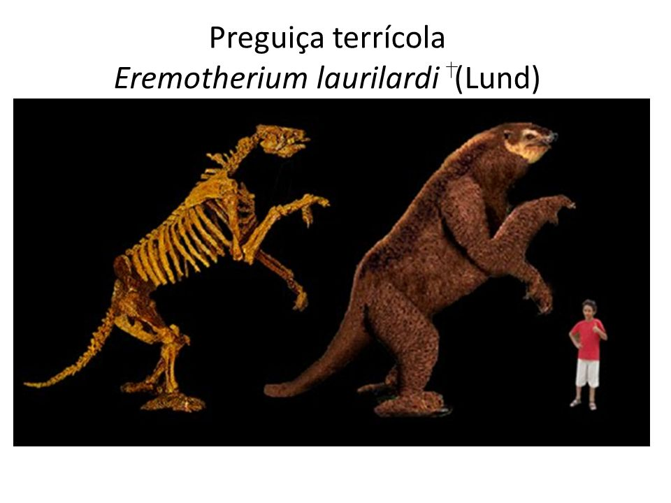Preguiça terrícola Eremotherium laurilardi (Lund)