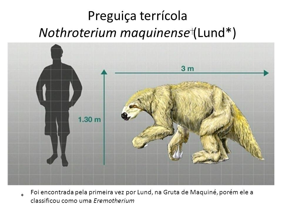 Preguiça terrícola Nothroterium maquinense (Lund*)