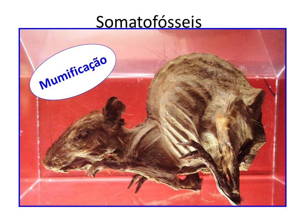 Somatofósseis Mumificação