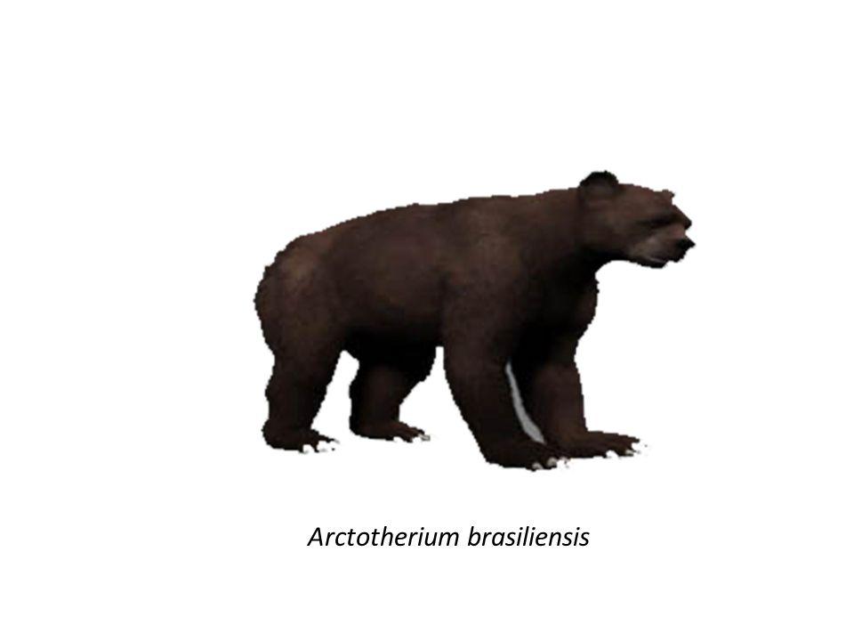 Arctotherium brasiliensis