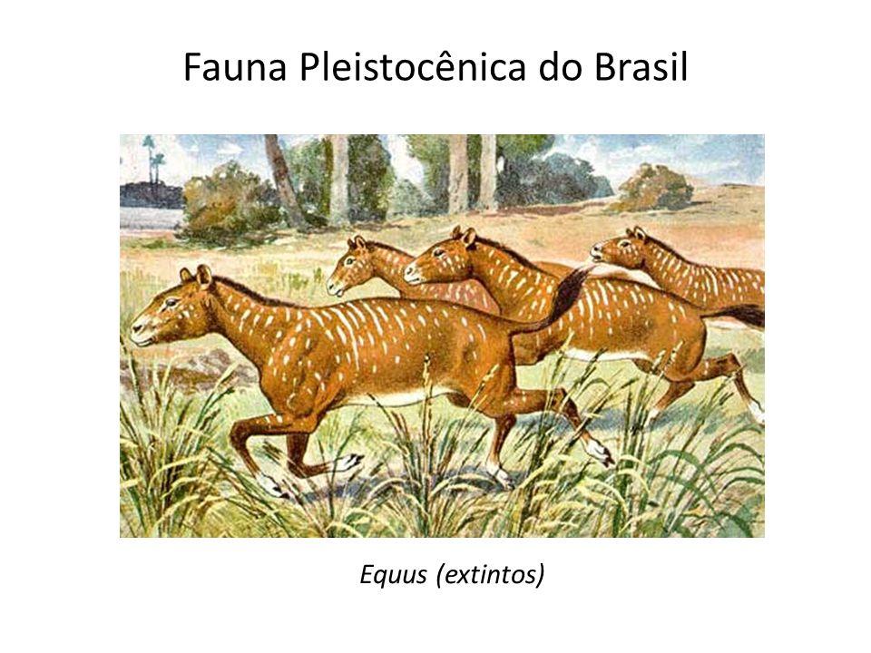 Fauna Pleistocênica do Brasil