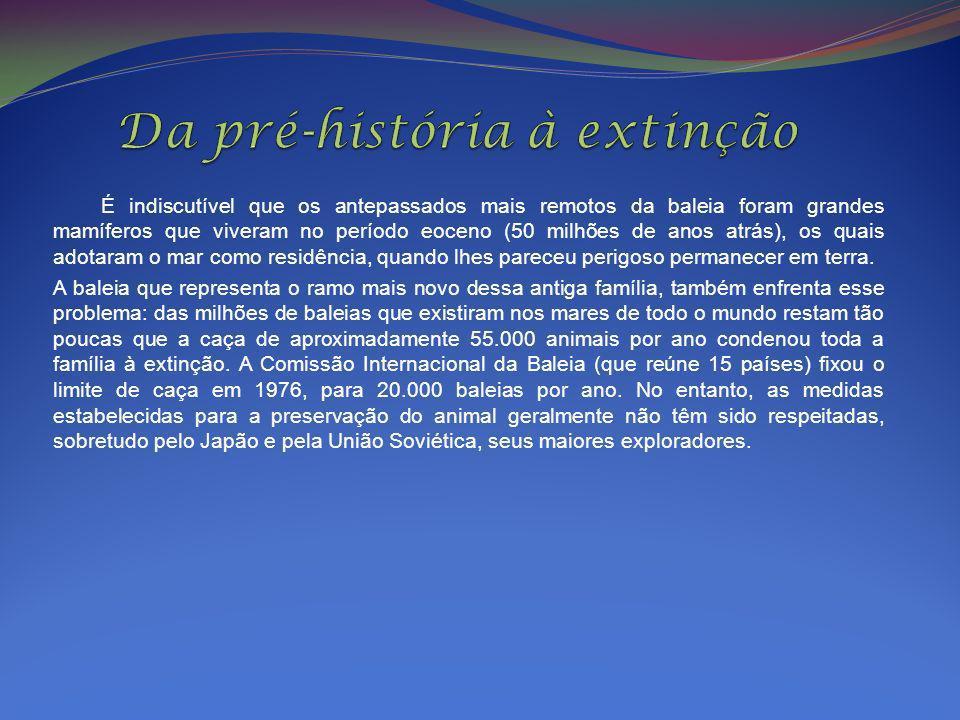 Da pré-história à extinção
