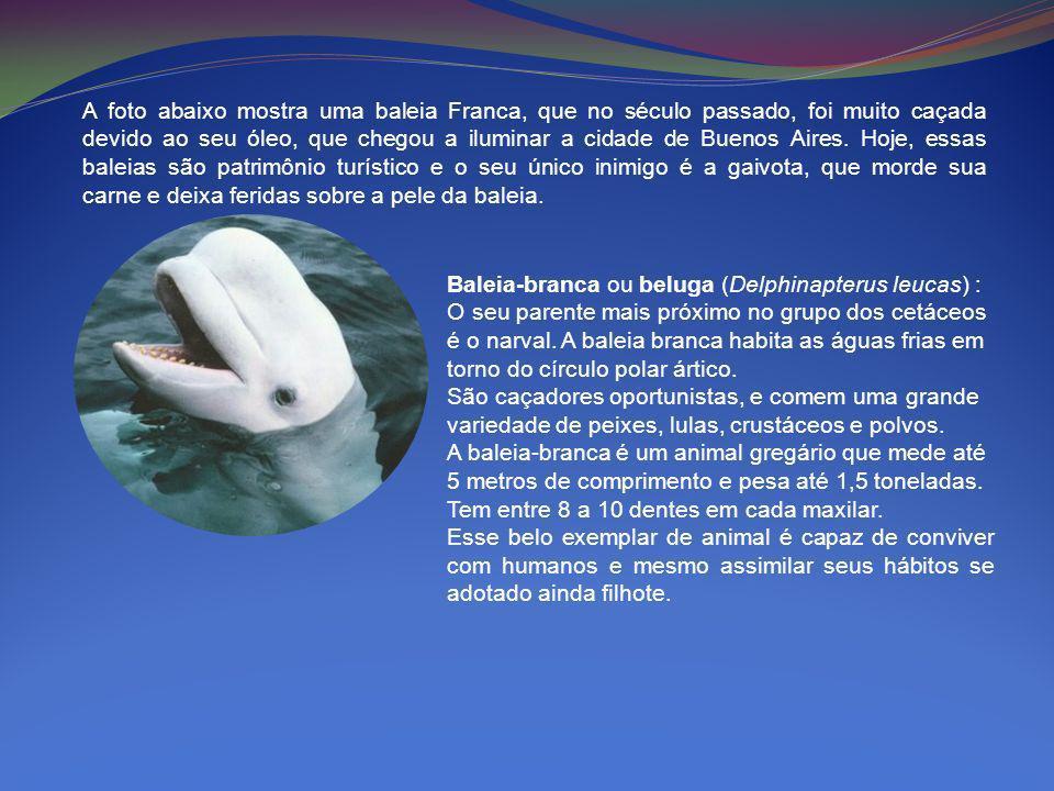 A foto abaixo mostra uma baleia Franca, que no século passado, foi muito caçada devido ao seu óleo, que chegou a iluminar a cidade de Buenos Aires. Hoje, essas baleias são patrimônio turístico e o seu único inimigo é a gaivota, que morde sua carne e deixa feridas sobre a pele da baleia.