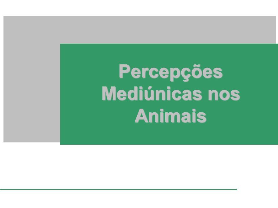 Percepções Mediúnicas nos Animais