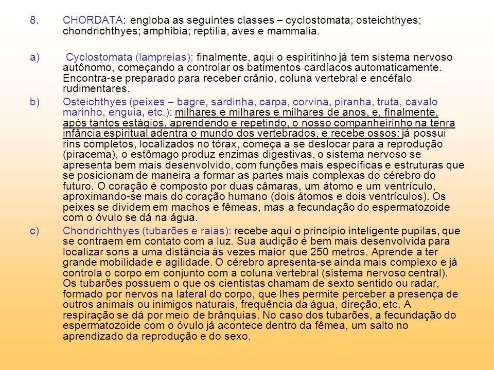 CHORDATA: engloba as seguintes classes – cyclostomata; osteichthyes; chondrichthyes; amphibia; reptilia, aves e mammalia.