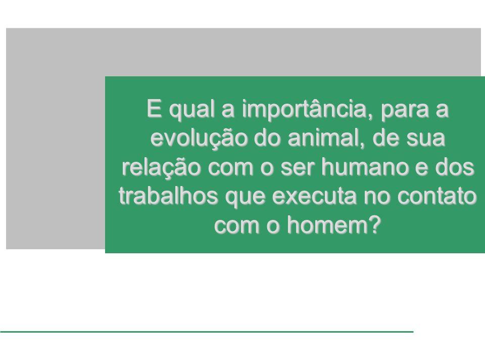 E qual a importância, para a evolução do animal, de sua relação com o ser humano e dos trabalhos que executa no contato com o homem