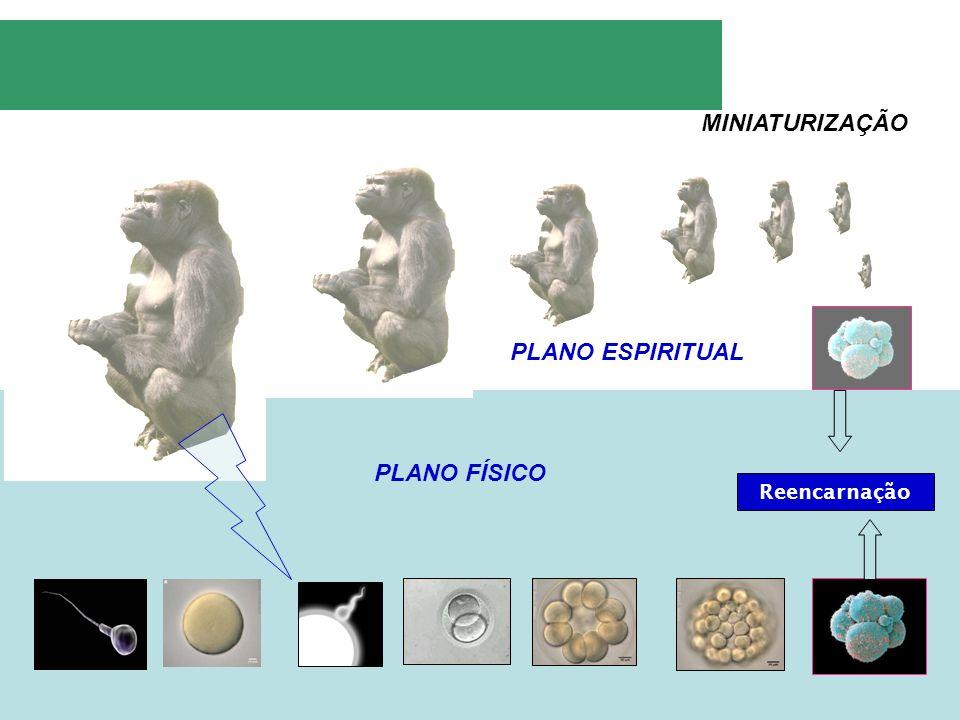 MINIATURIZAÇÃO PLANO ESPIRITUAL PLANO FÍSICO Reencarnação