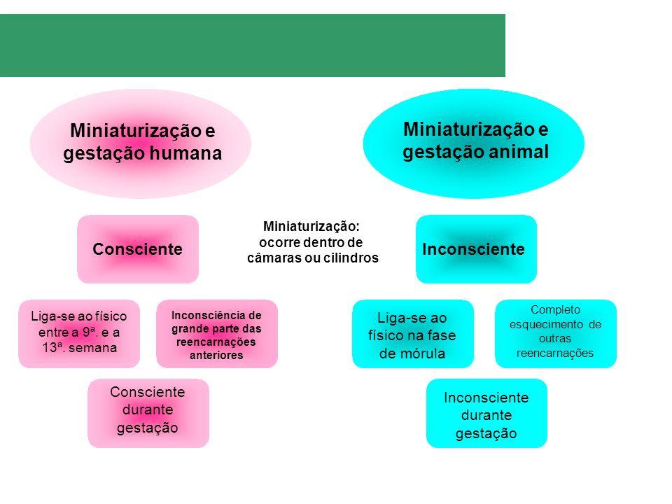 Miniaturização e gestação humana Miniaturização e gestação animal