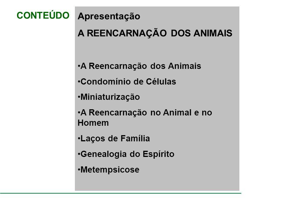 A REENCARNAÇÃO DOS ANIMAIS