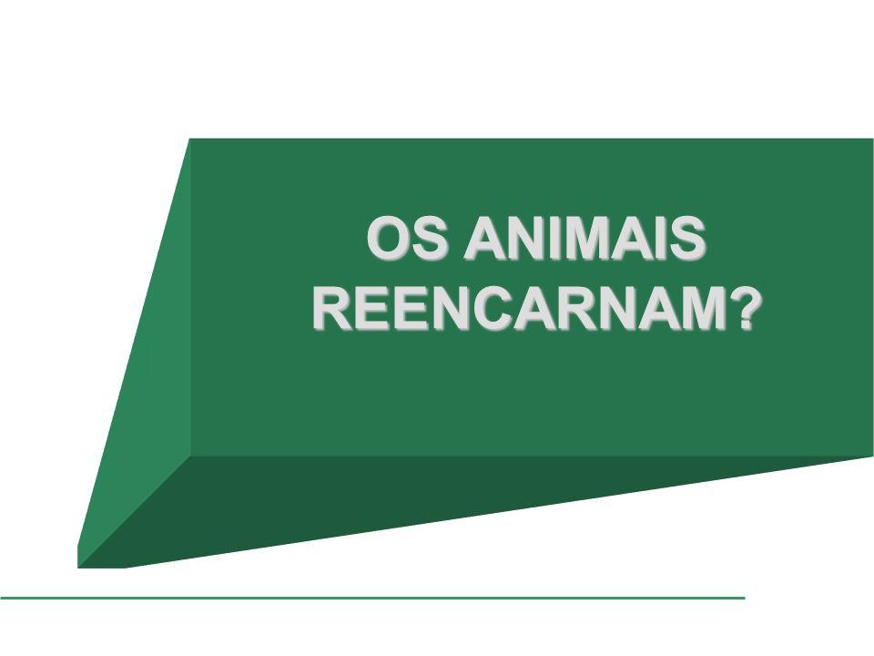 OS ANIMAIS REENCARNAM