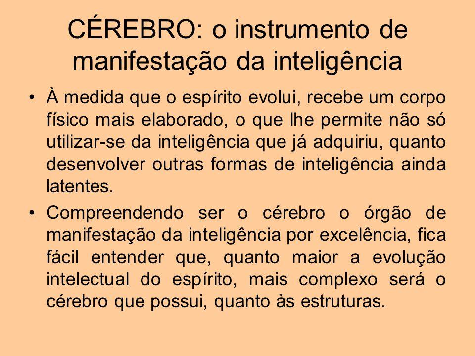 CÉREBRO: o instrumento de manifestação da inteligência
