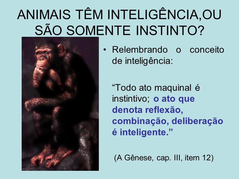 ANIMAIS TÊM INTELIGÊNCIA,OU SÃO SOMENTE INSTINTO