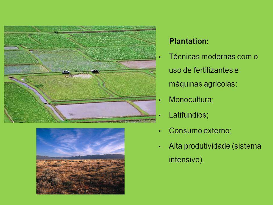 Plantation: Técnicas modernas com o uso de fertilizantes e máquinas agrícolas; Monocultura; Latifúndios;