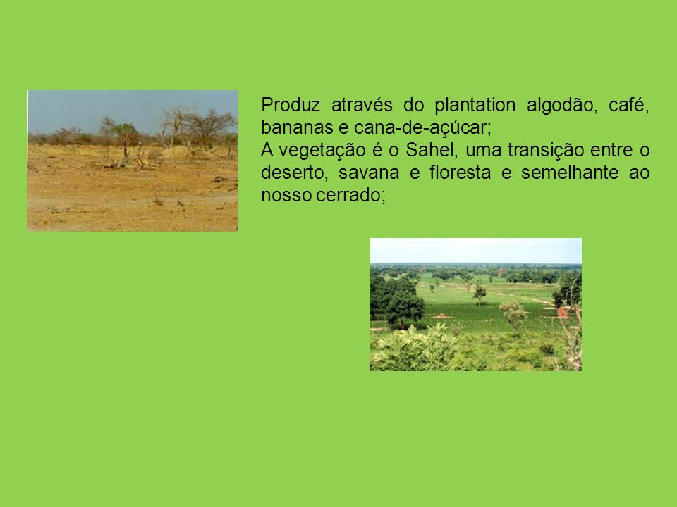 Produz através do plantation algodão, café, bananas e cana-de-açúcar;