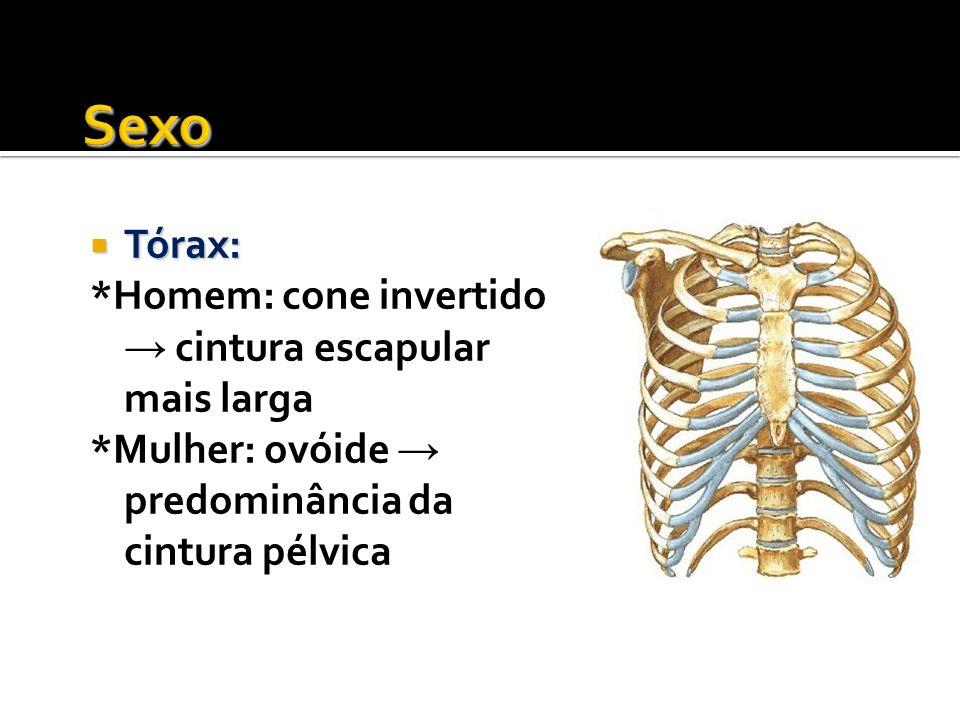 Sexo Tórax: *Homem: cone invertido → cintura escapular mais larga