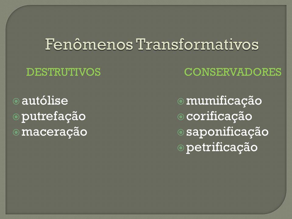 Fenômenos Transformativos