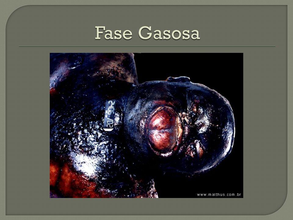 Fase Gasosa