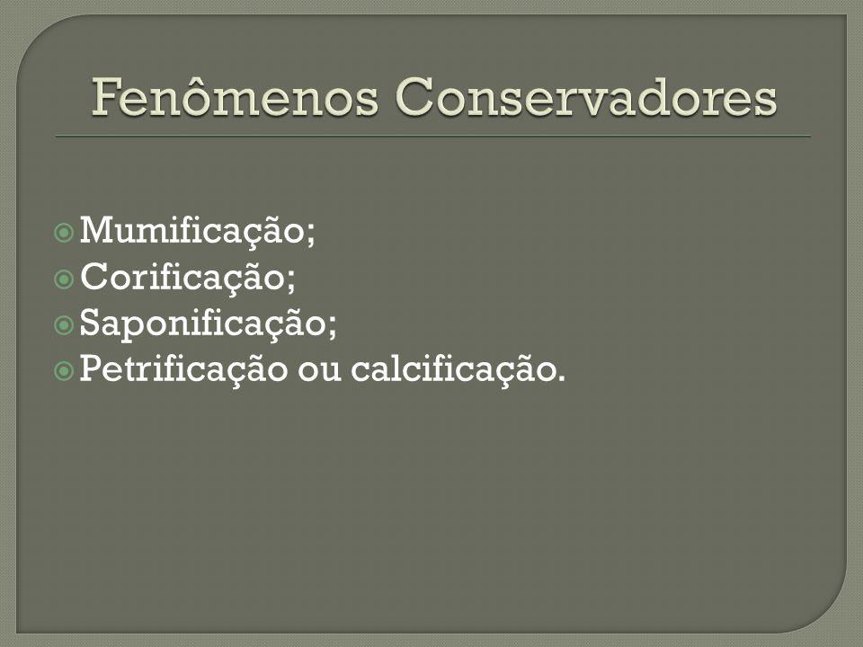 Fenômenos Conservadores