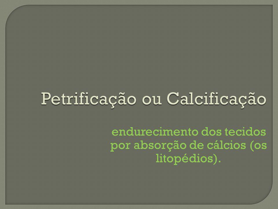 Petrificação ou Calcificação