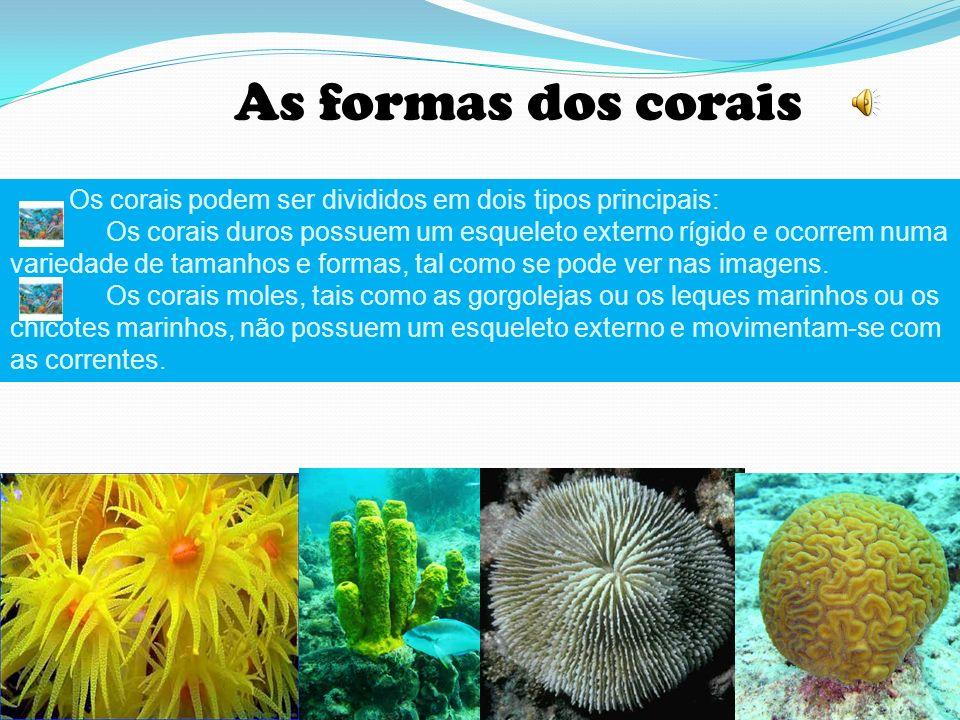 As formas dos corais Os corais podem ser divididos em dois tipos principais: