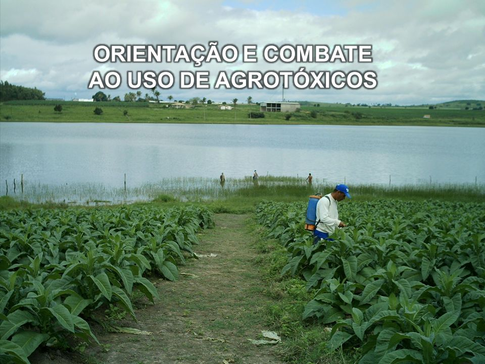 ORIENTAÇÃO E COMBATE AO USO DE AGROTÓXICOS