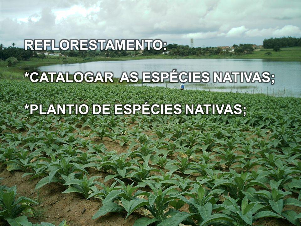REFLORESTAMENTO: *CATALOGAR AS ESPÉCIES NATIVAS; *PLANTIO DE ESPÉCIES NATIVAS;