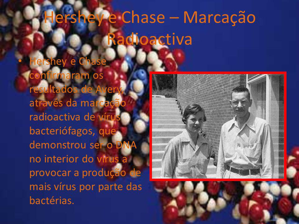 Hershey e Chase – Marcação Radioactiva