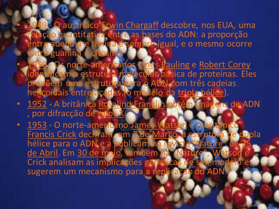 1949 - O austríaco Erwin Chargaff descobre, nos EUA, uma relação quantitativa entre as bases do ADN: a proporção entre adenina e timina é sempre igual, e o mesmo ocorre entre guanina e citosina.