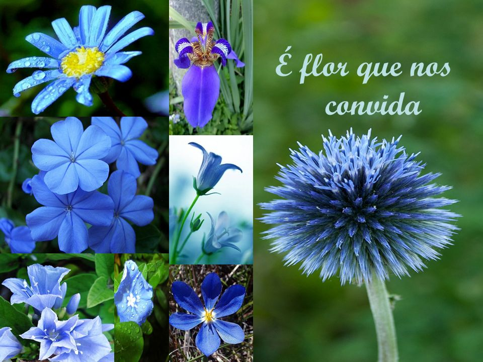 É flor que nos convida
