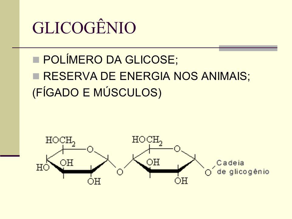 GLICOGÊNIO POLÍMERO DA GLICOSE; RESERVA DE ENERGIA NOS ANIMAIS;