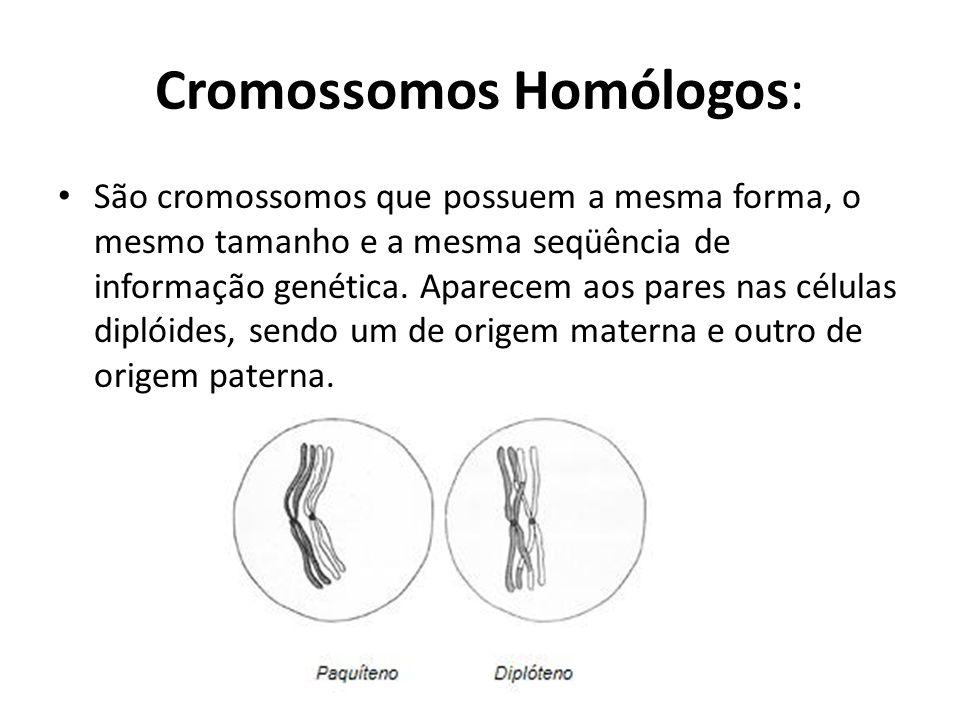 Cromossomos Homólogos: