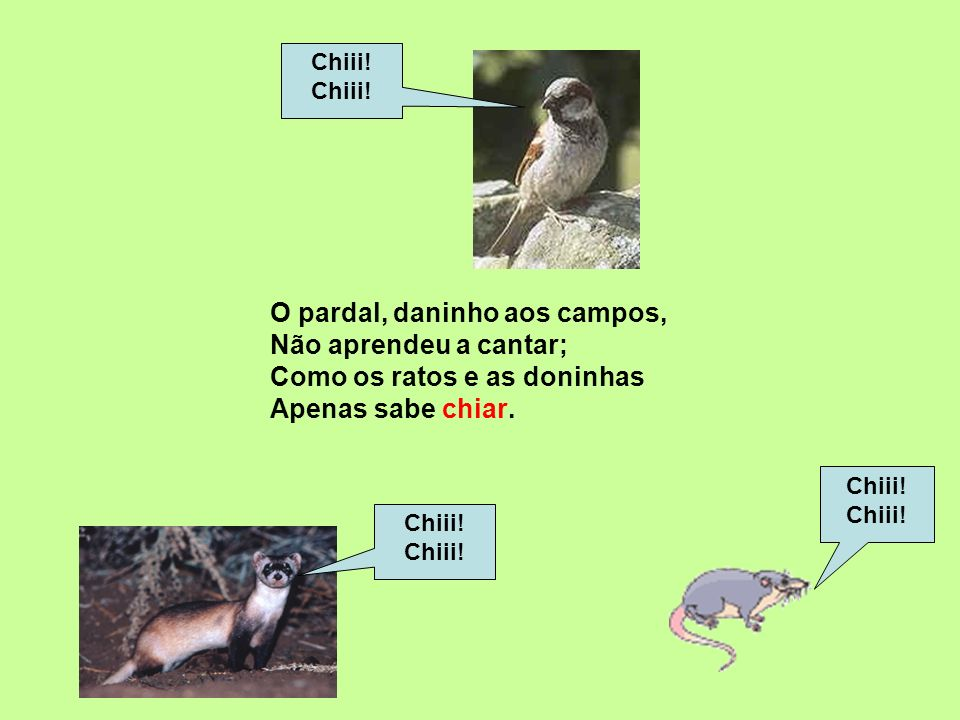 Chiii! O pardal, daninho aos campos, Não aprendeu a cantar; Como os ratos e as doninhas Apenas sabe chiar.