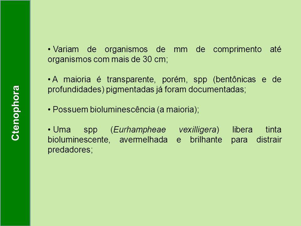 Ctenophora Variam de organismos de mm de comprimento até organismos com mais de 30 cm;