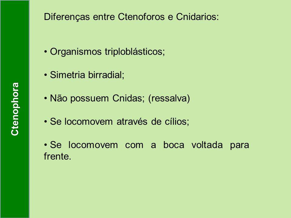 Ctenophora Diferenças entre Ctenoforos e Cnidarios: Organismos triploblásticos; Simetria birradial;