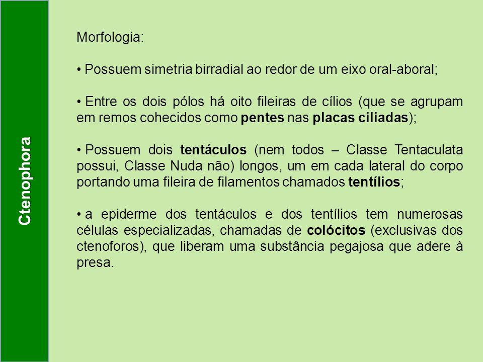 Ctenophora Morfologia: