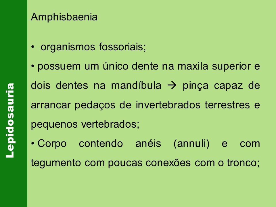 Amphisbaeniaorganismos fossoriais;