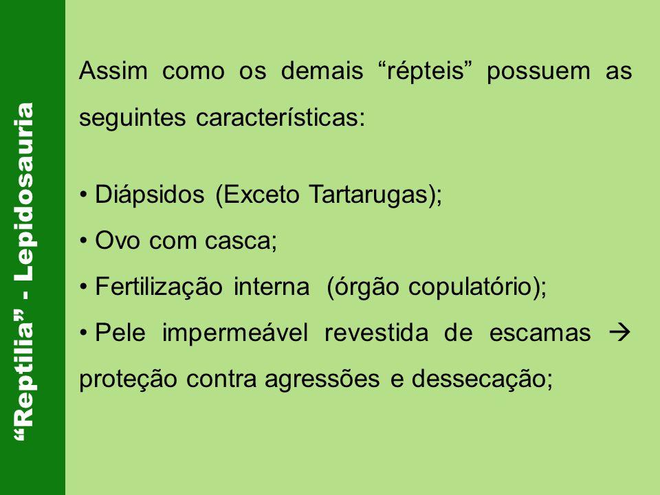 Assim como os demais répteis possuem as seguintes características: