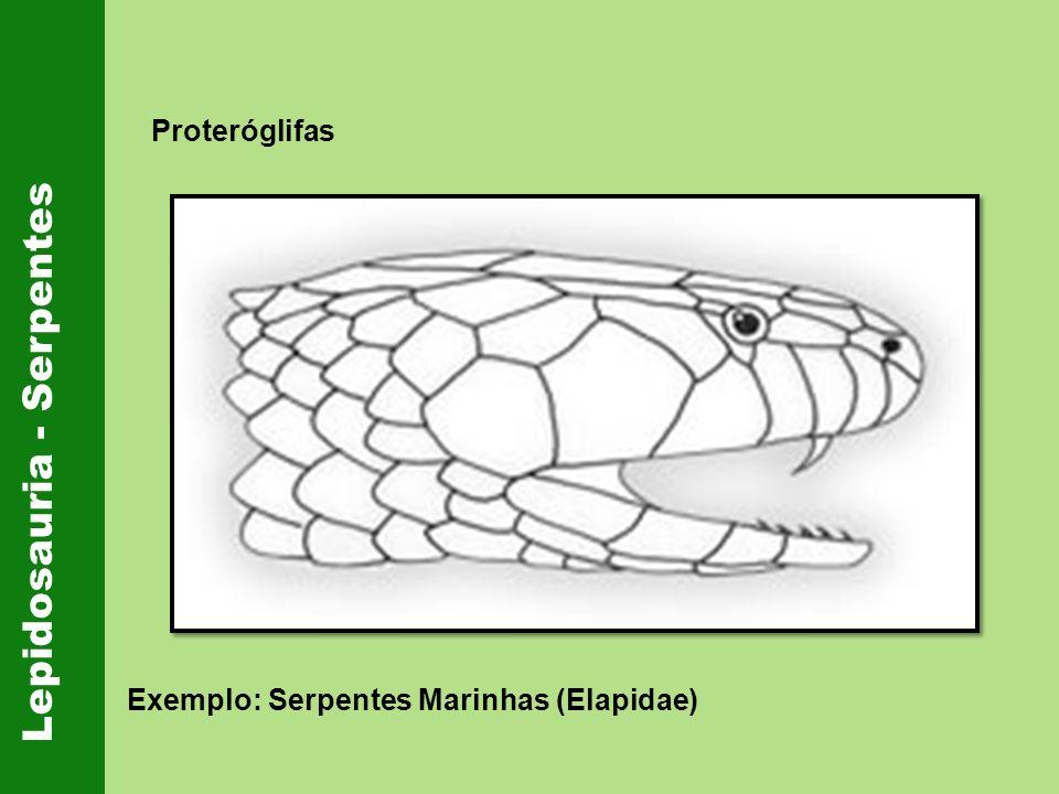 Lepidosauria - Serpentes