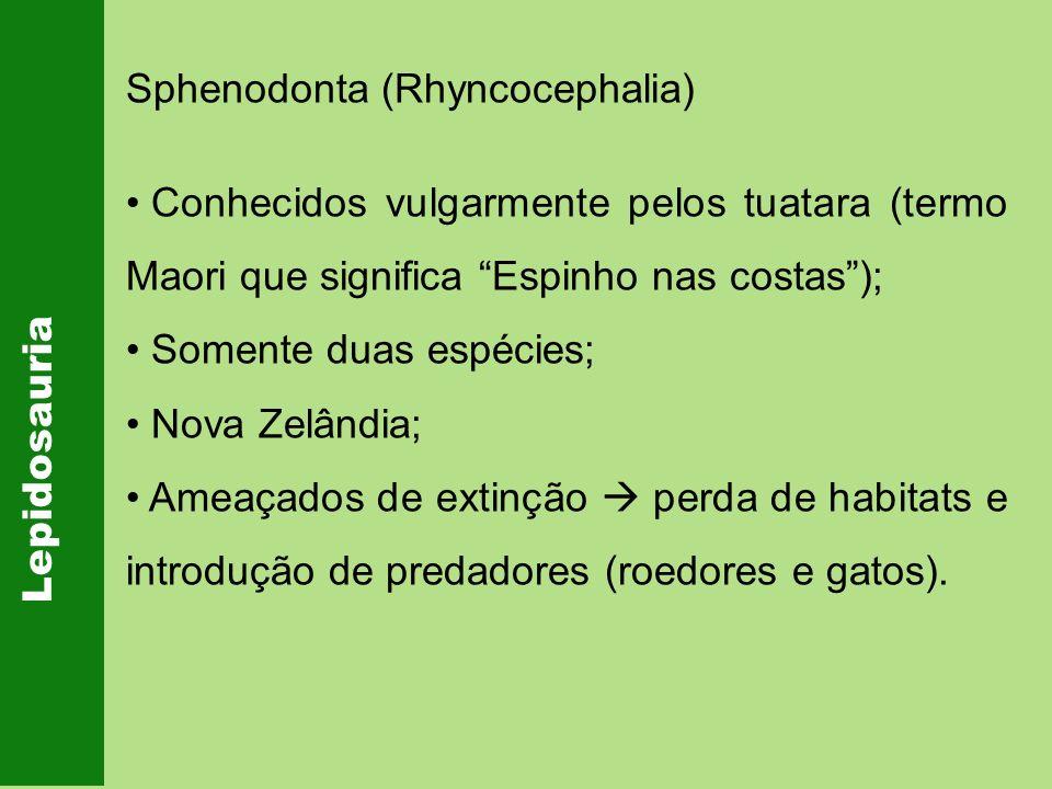 Sphenodonta (Rhyncocephalia)